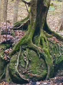 Mühlstein bei Saxenkam