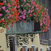 Blumenpracht in Nußdorf